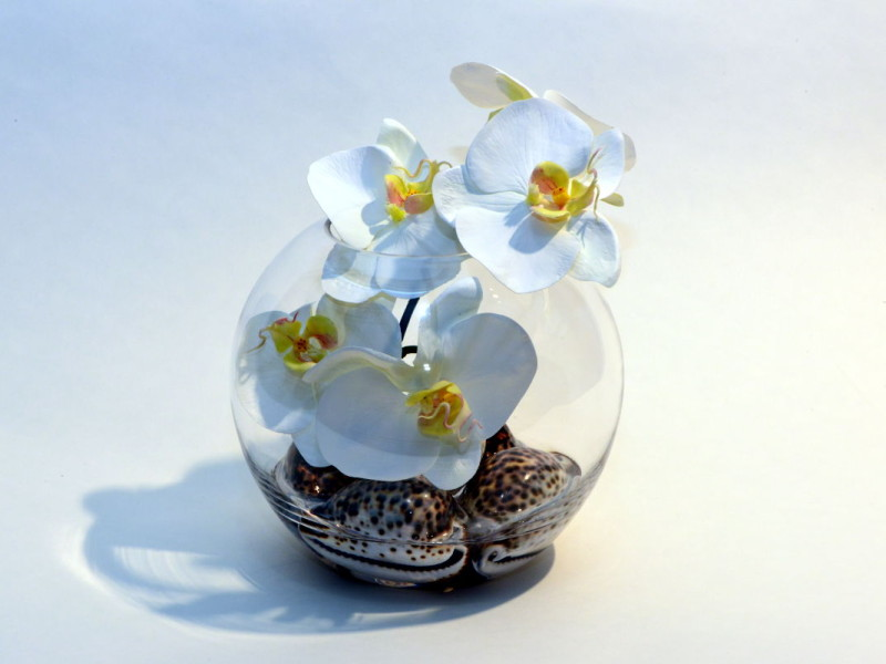 Tiger sea shells and orchids – perfect combination